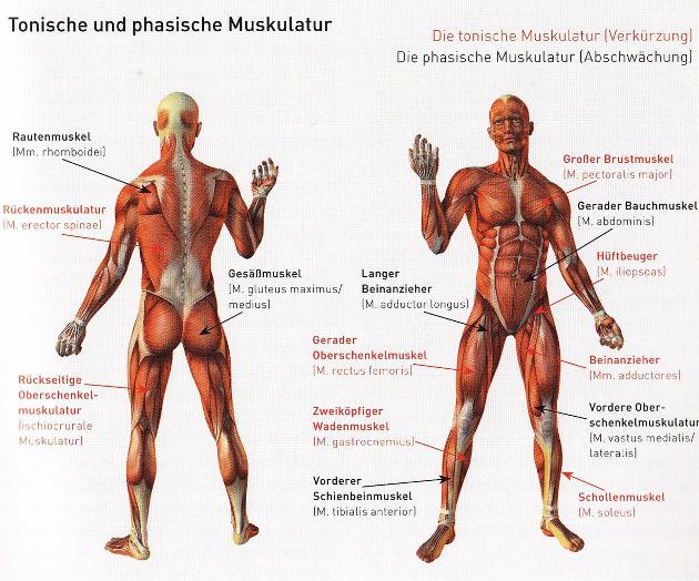 Lenden-Darmbein-Muskeln – Die INBESTFORM•EL – die Formel für Deine ...